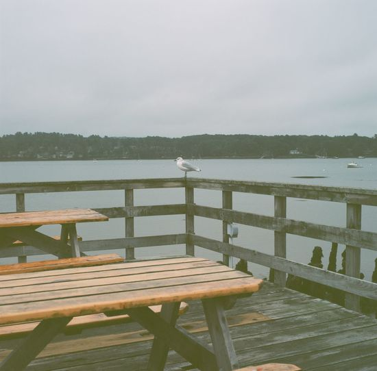 Seagull perched on the edge of the railing on a cloudy day in Maine. Beauty In Nature Bench Cloudy Day Idyllic Lake Nature Outdoors Pier Railing Scenics Sea Seagull Sky Tranquil Scene Tranquility Water Wood Wood - Material Wooden