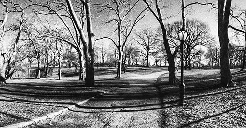 Conservatorywater NYC Newyork Newyorkcity CentralPark Travelandtakephoto Travelthruthelens Wilzworkz Instagood Instadaily Park Tree City Instamood