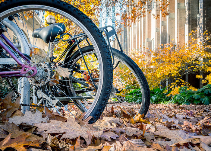 Bicycle parked by tree in city during autumn
