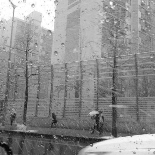 With Polaroid Snap 내가찍음 Polaroid Polaroidsnap Unprocessed Black Blackandwhite 폴라로이드 폴라로이드스냅 무보정 Streetphotography Street Snowing Snow Unbrella Tree