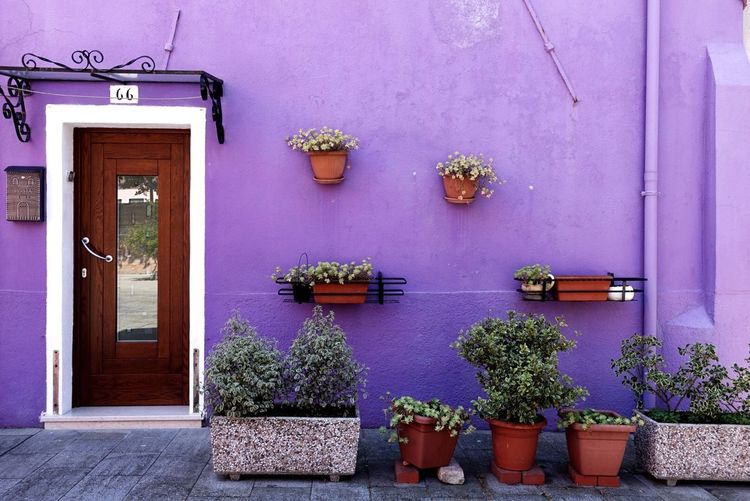 Violet💜 Potted Plant Plant Door Architecture Built Structure Day Growth Building Exterior No People House Outdoors Flower Window Box Nature Venezia Colorful Burano, Venice Italy Buranoisland