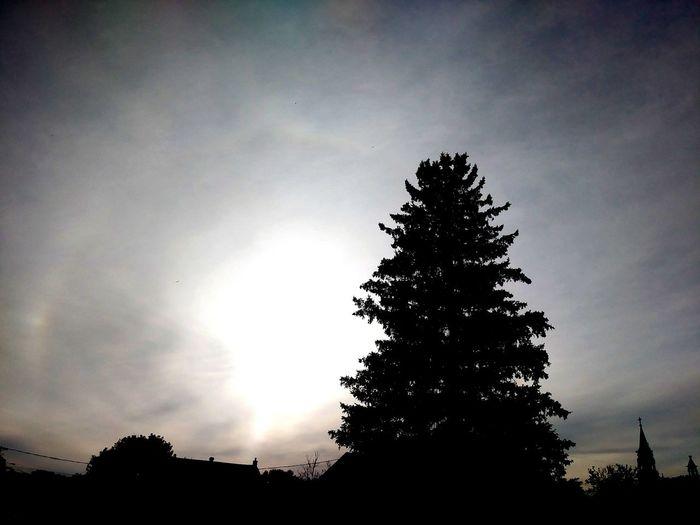 magical moment Clouds And Sky Sunset Sun Sky Defocused Silhouette Single Tree Treetop