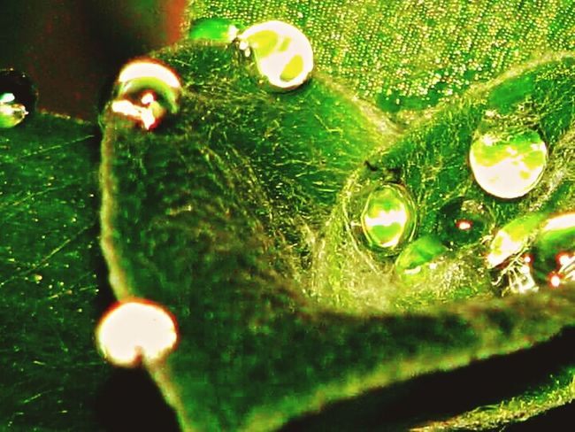Fine Art Photography Plants Dew Drops Dew Drops On Leaf Plant Photography Plantlife Beauty In Nature Photos Around You Photography Simple Things In Life Taking Photos Aspects Of Life Photolife Great_captures_nature Beautiful Nature Photography Nature Beauty Naturephotography Simple Photographylovers Simplicity.  MyPhotography Relaxing