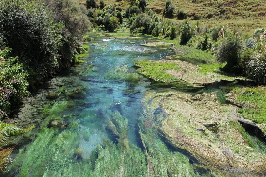 Beauty In Nature Day Grass Green Color Growth High Angle View Nature No People Outdoors Reflection Scenics Tree Water EyeEmNewHere Been There. New Zealand Beauty Blue Springs New Zealand Outdoor Activity Clean Water Clean Water Beautiful