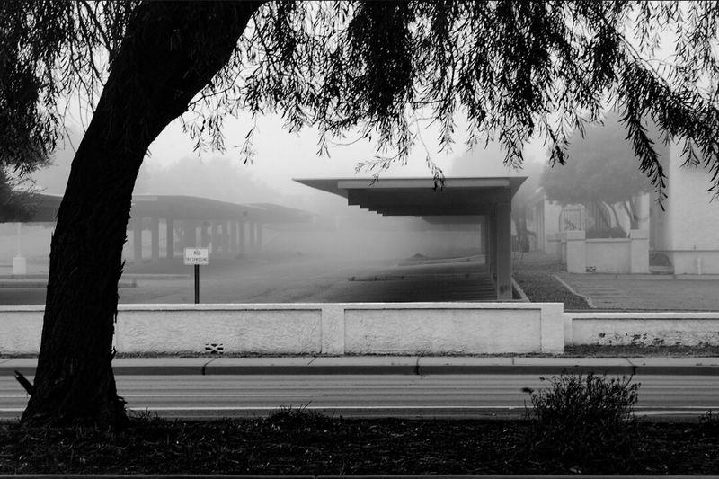 Foggy day Fog Foggy Pictureoftheday Ghosttown Moment Tree Nikon Taking Photos Blackandwhite Photography Bestoftheday