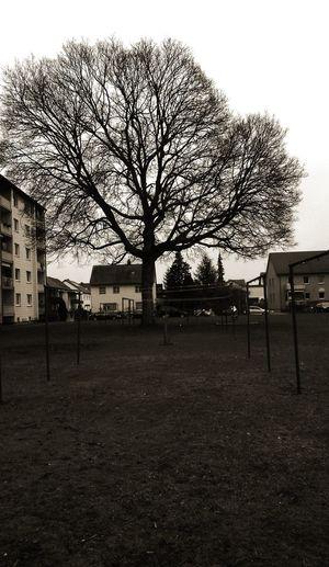 tree Big Tree Build Winter Trees Outdoors Sky Tree Day No People Nature