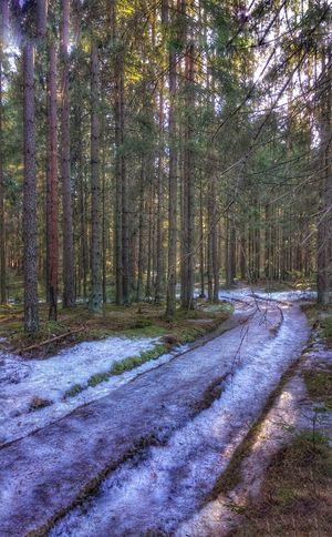 Почти суровая Russian winter 🌲❄️☃️