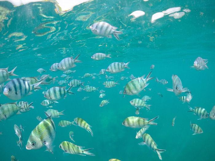 Large Group Of Animals Water Animal Wildlife No People Jellyfish Underwater Animals In The Wild UnderSea Nature Day Sea Outdoors Animal Themes Fish Belitung Island Pulau Lengkuas INDONESIA