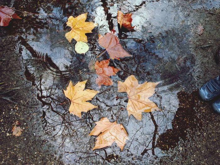 Outdoors Nature Waterrf Reflections In The Water Leaf 🍂 Autumn Autumn Leaves Autumn Colors Autumn🍁🍁🍁 Leafs On Water