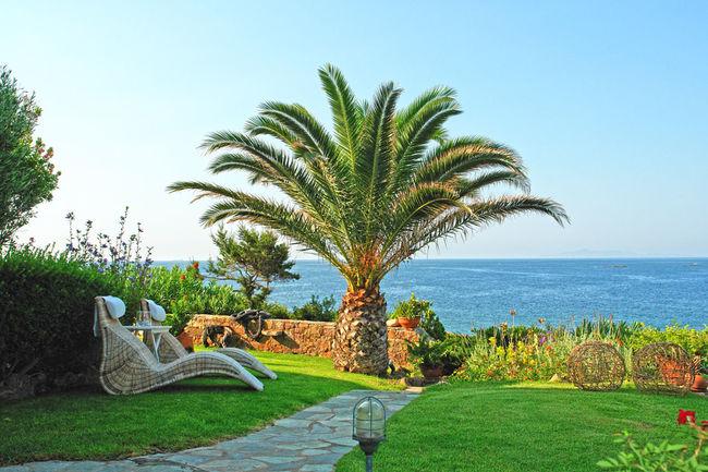 The Palm Tree Athens Blue Greece Green Open Palm Riviera Sea Sea And Sky Tree