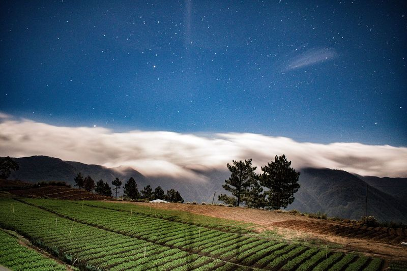 Farming stars Sky Landscape Scenics - Nature Environment Land Beauty In Nature Rural Scene Star - Space Field Astronomy Tranquil Scene Space Agriculture Tranquility Plant Growth Nature Farm Star Cloud - Sky