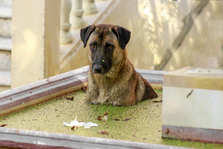 Portrait of dog sitting outdoors