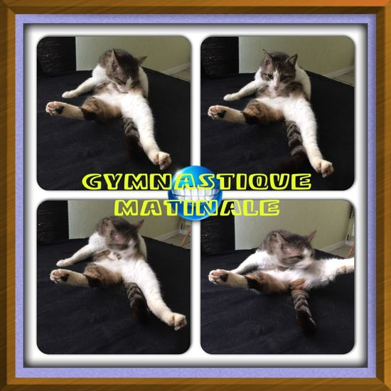 Gymnastique matinale pour Mimine 😃😸 Mon Ami Le Chat Animal Chat Catfie CHATFIE Animals Cat