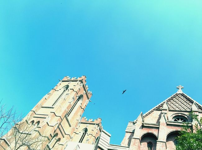 The blue of sky with the gothic of church and wings of nature !! Nexus 5
