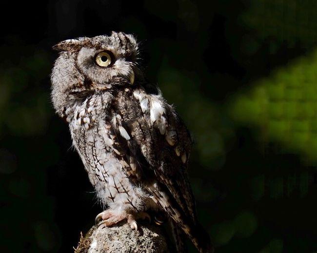 Close-up of owl at night