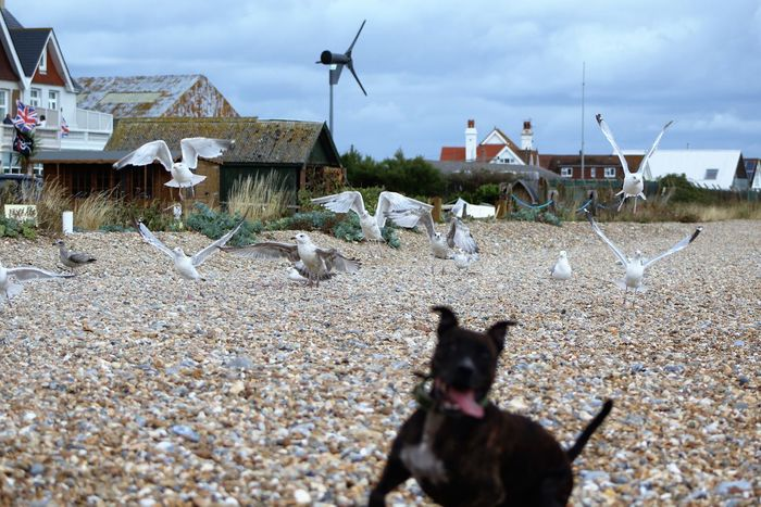 Animal Themes Domestic Animals House Mammal One Animal Built Structure Pets Architecture Building Exterior Zoology Day Field Brown No People Focus On Foreground Animal Non-urban Scene Town Windmill Rural Scene Beachphotography Natural Beauty Beach Life Photobombed