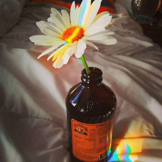 Big Daisy Prism Spectrum Petals🌸 Flower Flower Head Bottle Close-up