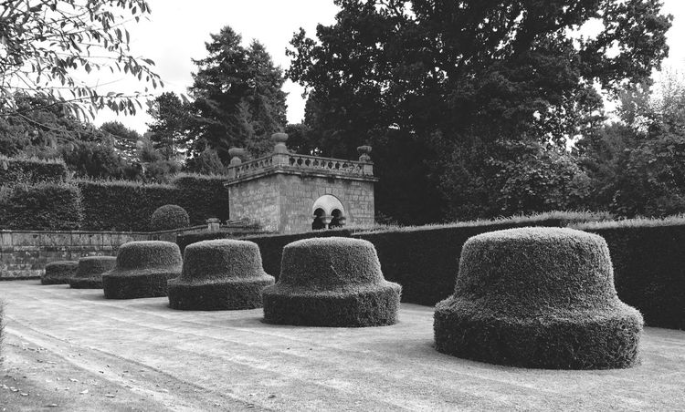 Extreme topiary 😊 Tree Nature Tranquility Formal Garden IPhone Photography EyeEm Gallery Iphone6s Eye4photography  IPhoneography IPhone My Smartphone Life Iphonephotography Topiary Beauty In Nature Garden Garden Photography Blackandwhite Black And White Black & White Blackandwhite Photography Black And White Photography Black&white Outdoors Landscape Landscape_Collection