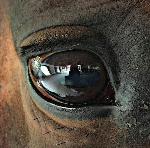 Animal Eye Horse Eye Horse Spanish Horses Reflection Spanishorse First Eyeem Photo The Week Of Eyeem Fotography EyeEm