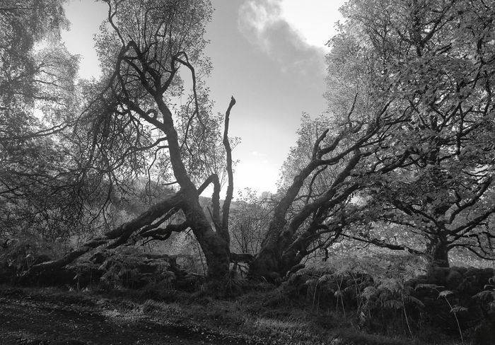All that matters is well. Hugging A Tree Inverawe Black And White Argyll Scotland Nature Trees Willow Tree