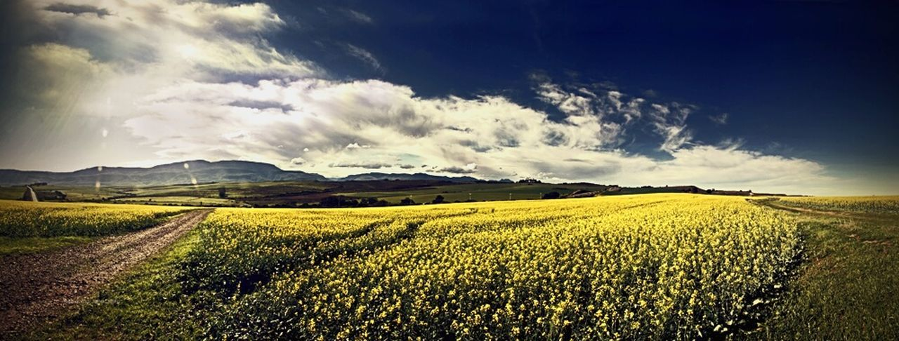 Yellow and blue. Fields of flowers. Clouds And Sky Southafrica Outdoors Nature Landscape Clouds Flowers Sunlight Environment Lemon By Motorola