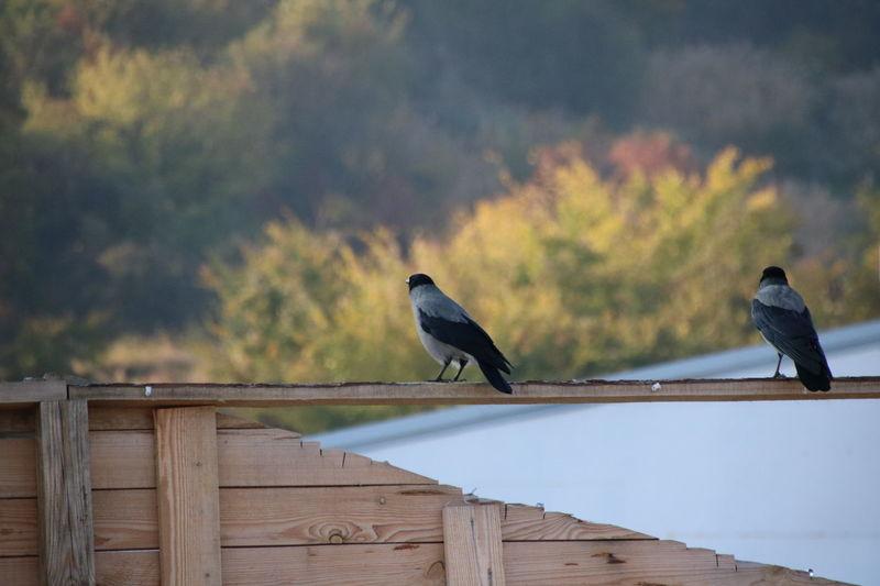Birds Bird Bird Photography Crow Black No People Outdoors Day Sky