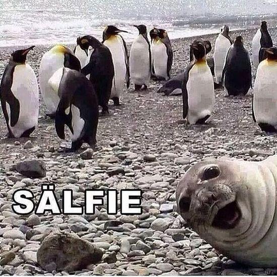 This is probably the best Selfie ever! Seal Sealfie Salfie Penguin Ice Water Funny SelfieRevolution Sand