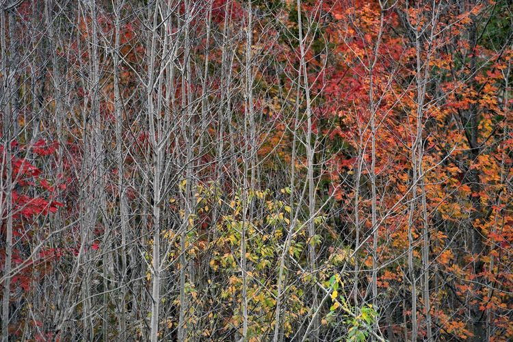 Close-up of plants growing in forest during autumn