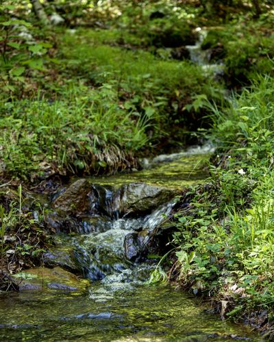 Water Nature Tranquility Green Color Grass Outdoors Day No People Forest Beauty In Nature Pennsylvania
