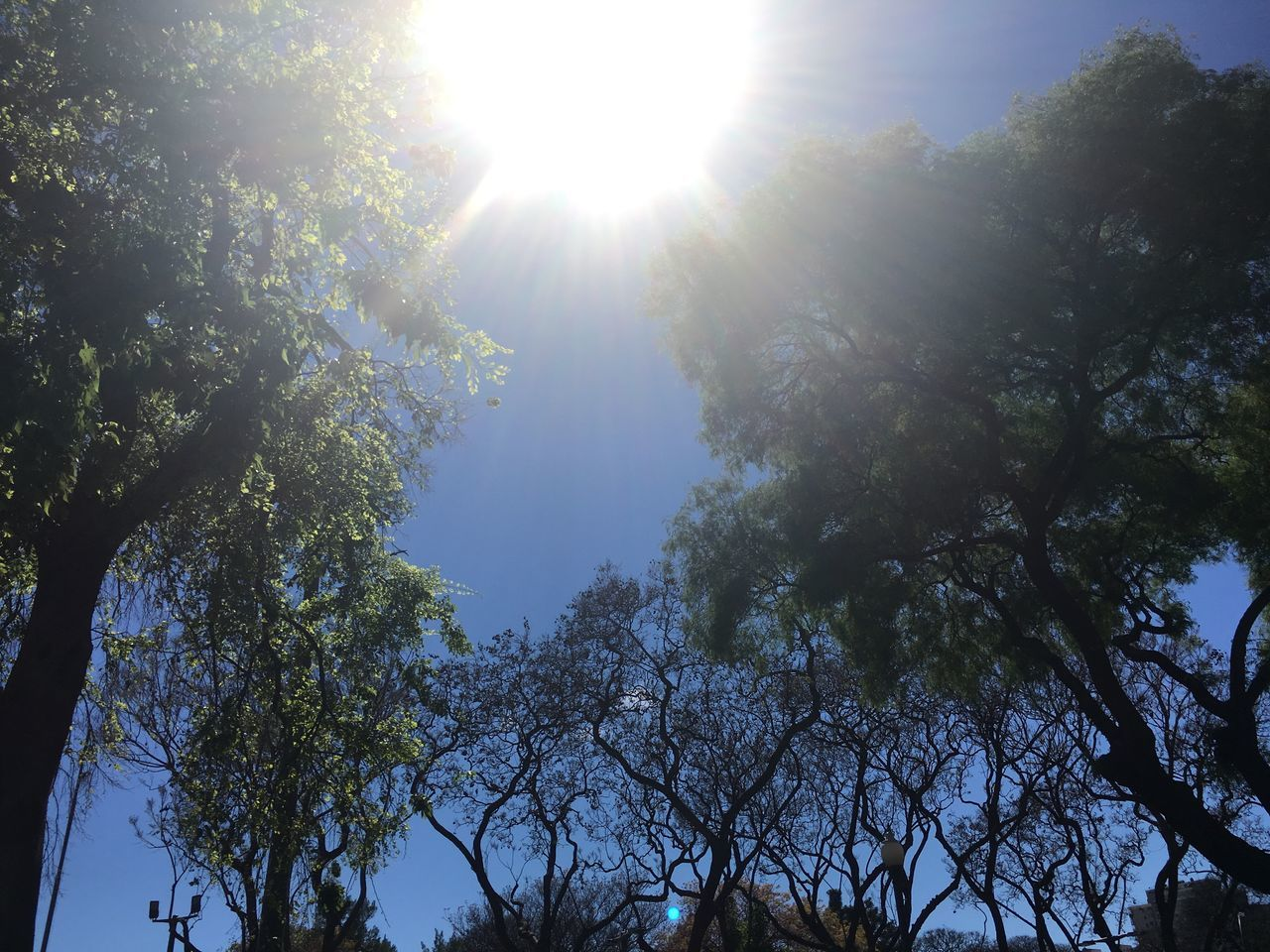 tree, nature, low angle view, sunbeam, beauty in nature, sunlight, day, sunny, growth, lens flare, sun, tranquility, no people, outdoors, branch, scenics, sunshine, sky, freshness