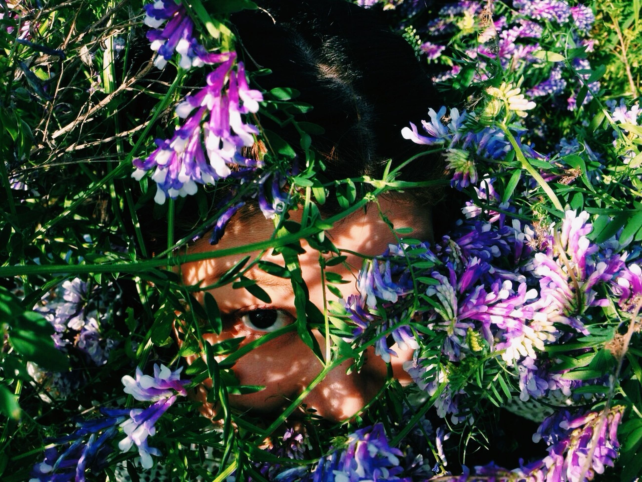 flower, purple, freshness, growth, fragility, plant, petal, beauty in nature, blooming, nature, flower head, high angle view, field, in bloom, close-up, outdoors, day, no people, grass, park - man made space