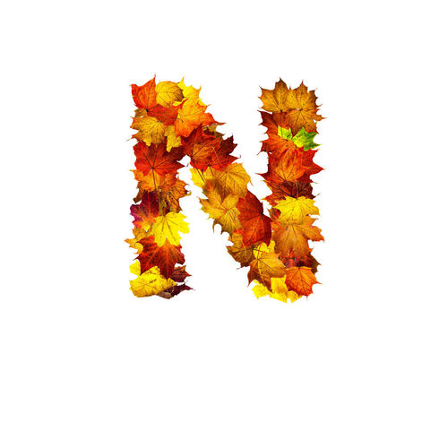 Close-up of orange maple leaves on white background
