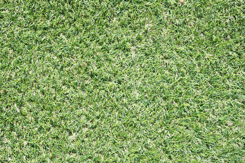Background Backgrounds Clean Day Directly Above Field Full Frame Grass Green Color Growth High Angle View Land Lawn Nature No People Outdoors Plant Playing Field Soccer Soccer Field Sports Surface Texture Turf