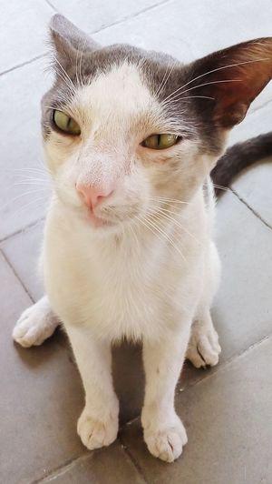Plomo 😍😃 Cat♡ Cats Lovecats❤️ Collection EyeEm Granada, Nicaragua Sleepy Selfiecat 🐱 Cute Pets