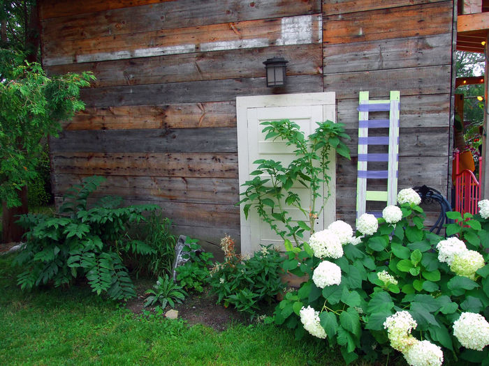 Flowers and ladder against the barn wall Barn Flower Garden Ladder Rustic Architecture Barn Board Background Barn Wall Barnboard Beauty In Nature Building Exterior Built Structure Day Flower Freshness Green Color Growth Ivy Leaf Nature No People Nostalgic  Old Barn Outdoors Plant Rural Scene