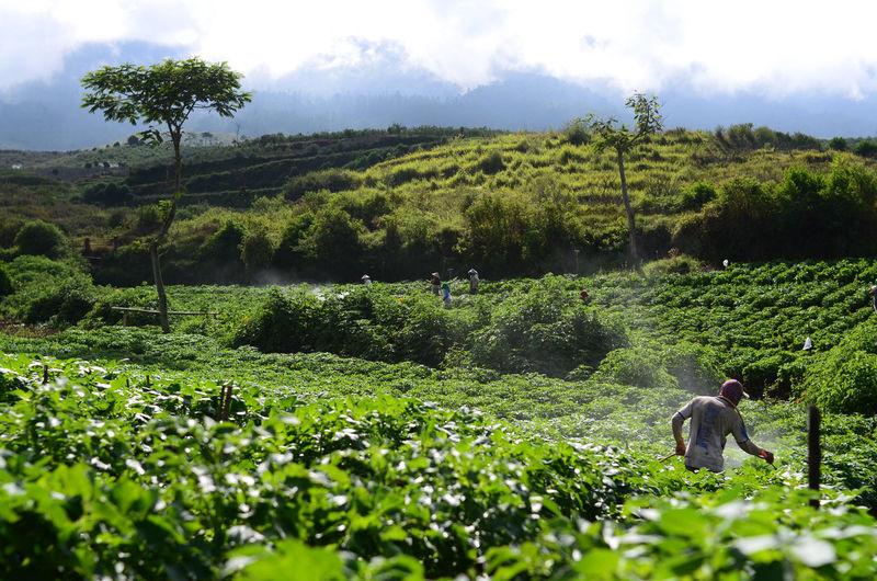 Rear view of farmer working in farm
