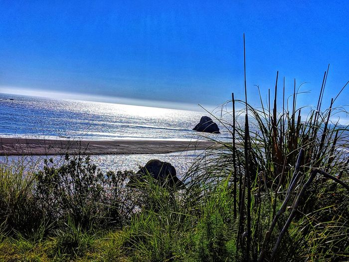 Foreground tall grasses. Framing Russian River converging with Pacific ocean. Blue Reflected Light Sea Russian River Converging Merging Shadow Background Therapeutic Zen Ocean Stunning Shadow Light Water Blue Sea Beach Sky Close-up Growing Foreground Tranquil Scene Countryside Marram Grass Blade Of Grass Horizon Over Water Tranquility Calm Scenics