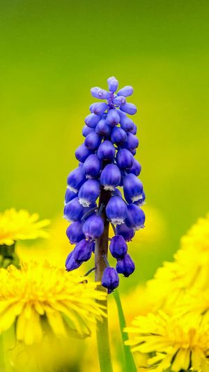Flower Purple Beauty In Nature Blossom Plant Fragility Yellow Nature Emotions Lovemylife😘 Flowers 🌸🌸🌸 Mylife ♡ Myobsession Mylife❤ Mypassion♥ MyPassionInLife Great View LoveIt ❤️ Beauty In Nature