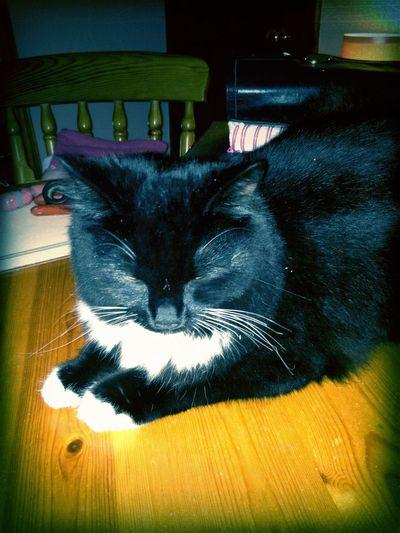 cat in Wigston Cat