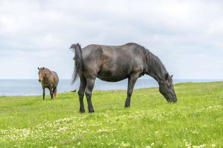 Wild horses shot on a green meadow by the sea shore. Mammal Animal Horse Outdoors Wild Horses Horses