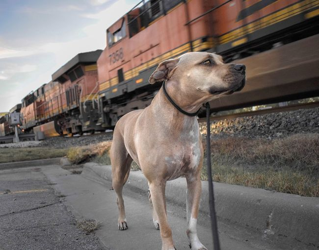 Close-up of dog by train against sky
