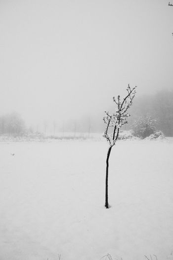 Snow covered tree on field against sky during winter