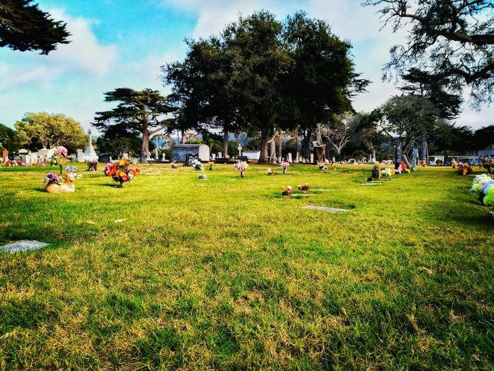 Cross Monterey