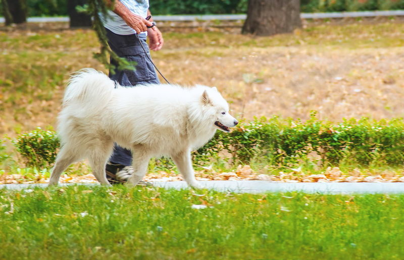 Low section of dog standing on field