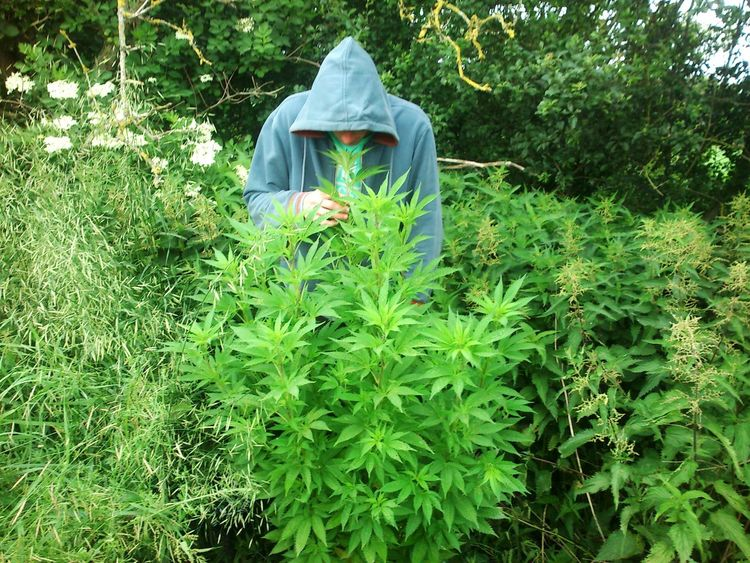 Sweet Smell Enjoying Life Hanging Out Weed Weed Plant