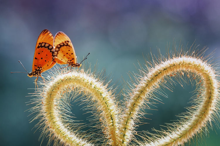 Close-up of butterflies on plant stem