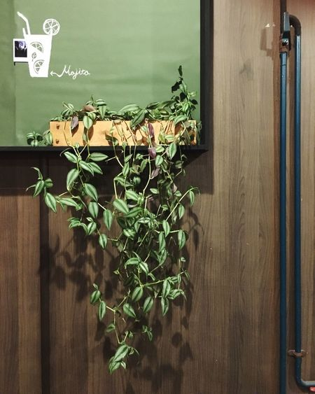 Plant Plant Growth No People Green Color Leaf Indoors  Wood - Material Text Nature Freshness Day Close-up Konjcafe