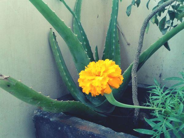 First Eyeem Photo Taking Photos Flowers