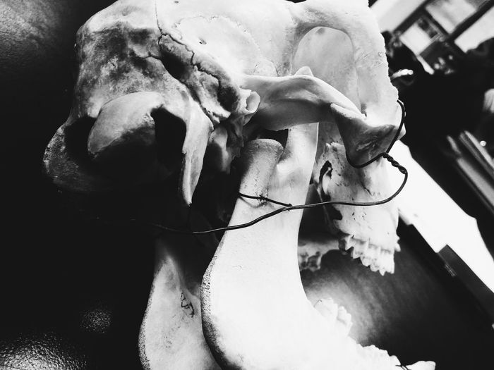 Q is for Queer Jaw Showcase March Science Lab Black And White Forensic Anthropology Forensic Science Lab Cow Skull Skull Bones The Lovely Bones VSCO Simple Photography Mystery Eerie Beautiful Looking Behind Telling Stories Differently Nature's Diversities Fine Art Photography Uniqueness BYOPaper!