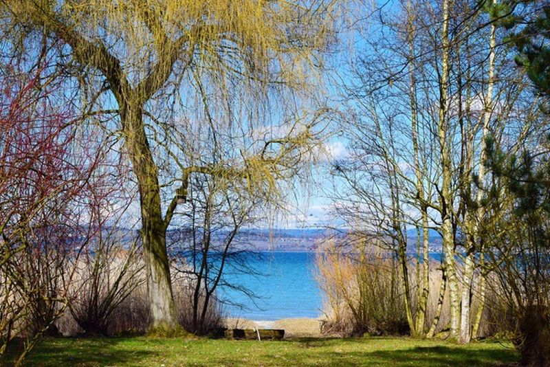 Tree Nature Grass Water Tranquility Bare Tree Day Tranquil Scene Beauty In Nature Outdoors No People Scenics Bodensee Wintertime Growth Branch Sky Thurgau Seeufer Bodenseebilder